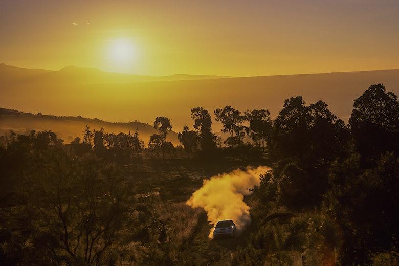 Burns, Safari