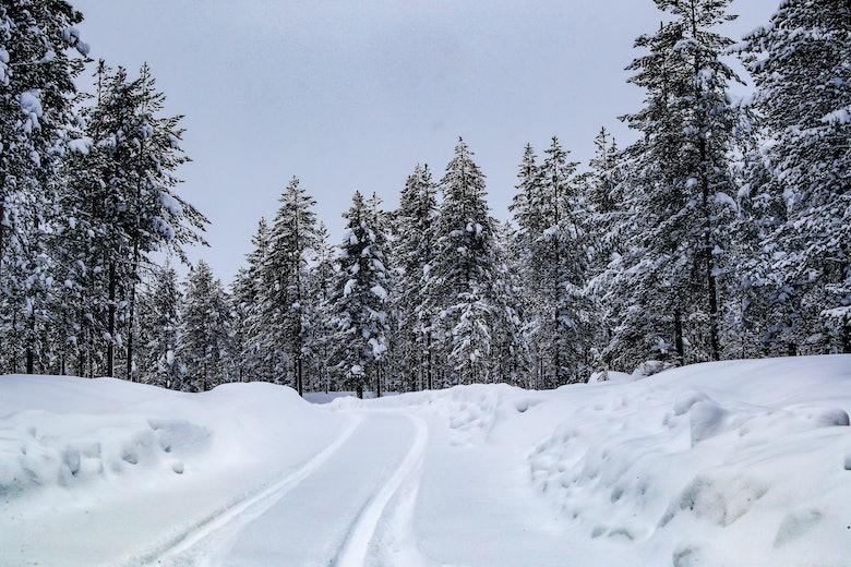 WRC_2021_Rd2._005